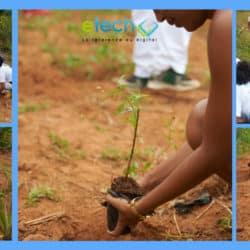 Reboisement à l'Eco-village d'Ambohimanga - eTech